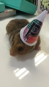 Our pet hamster celebrating Pushka's 7th Birthday